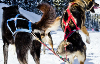 Dog Sledding and Snowshoeing tour